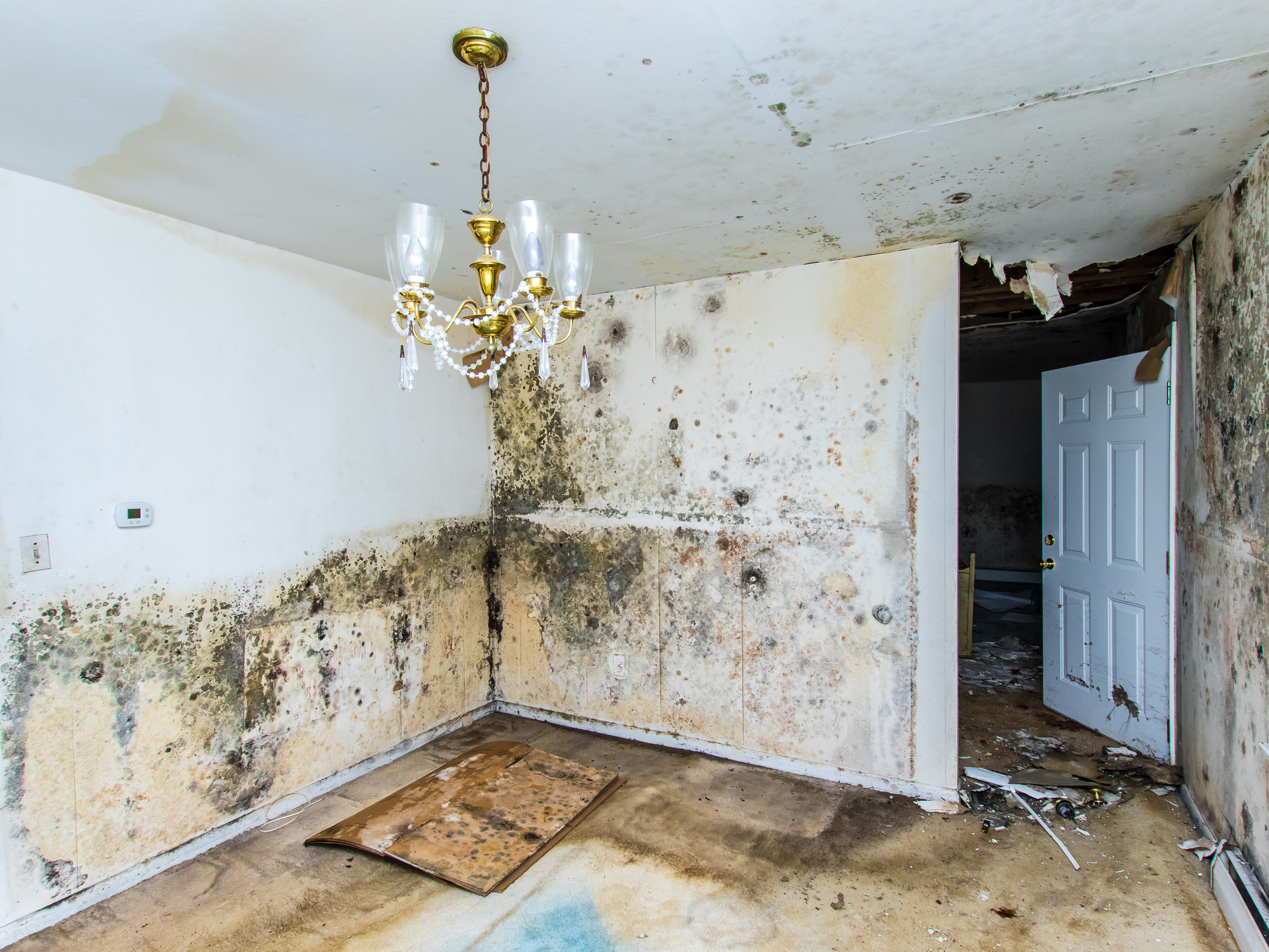 Top 5 signs of mold in your home rds environmental for Isolation interieur murs